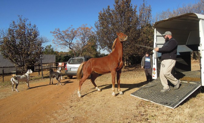 New horses arrive at Nullarbor Cottages