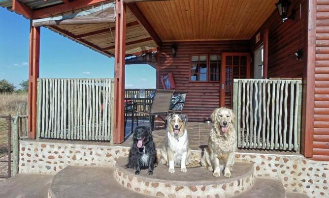 Fantastic pet friendly venue!