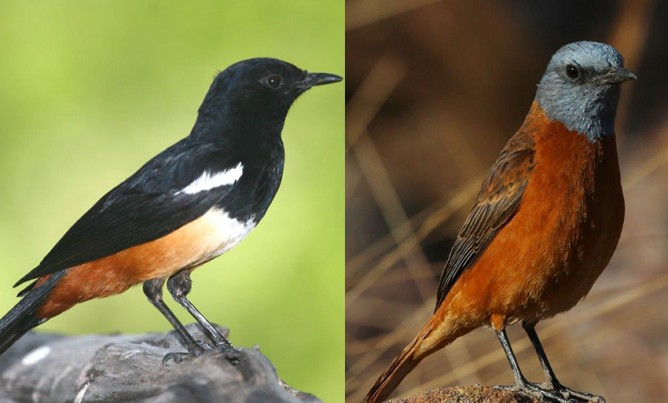 Birds of the Magaliesberg