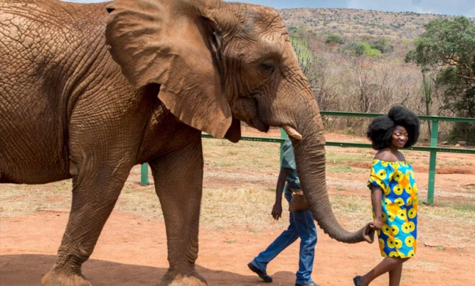 African Elephant experience in the Magalies Meander